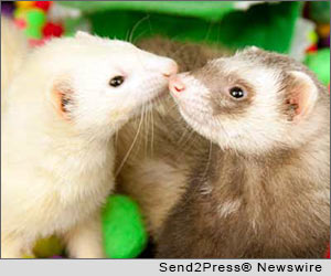 legalize ferrets in California, Fish and Game Commission, white house petition, Pat Wright