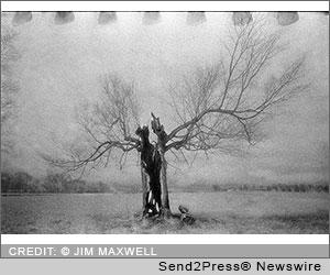 The Tree in Kentucky, Calumet Gallery, Calumet Photographic